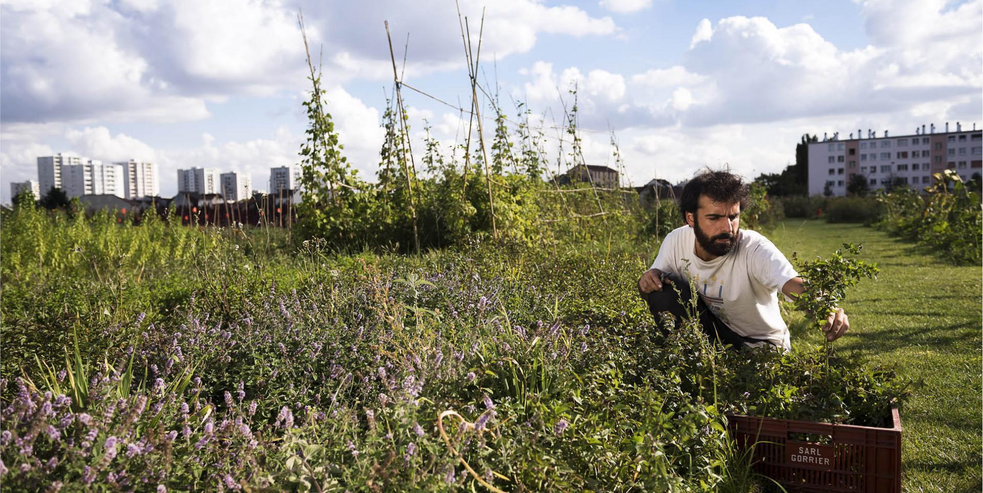 Visite de la ferme urbaine de Saint-Denis, Zone Sensible, désignée lauréate de l'appel à projets des Quartiers Fertiles