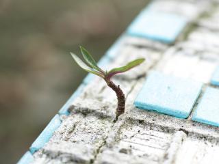Renouvellement urbain et transition écologique, photo d'illustration représentant une plante poussant dans du béton